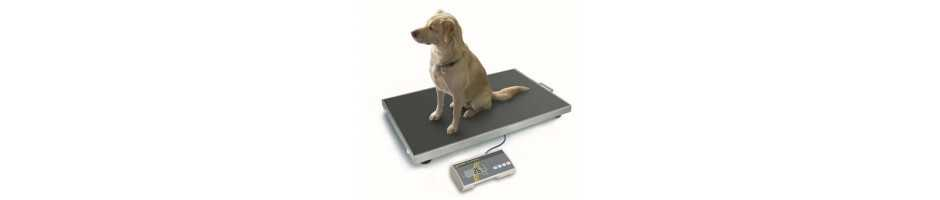 Veterinary and animal scales with robust technology and large display.