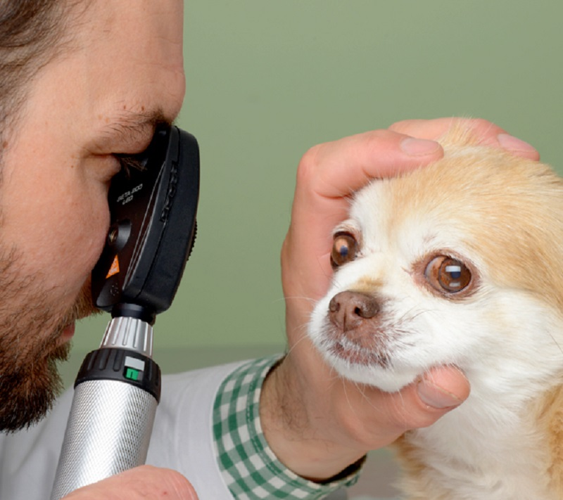 HEINE BETA 200 Veterinar Ophthalmoscope
